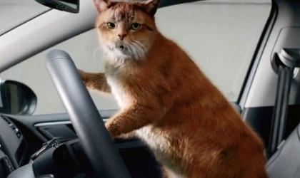 Креатив в рекламе автомобилей: животные и машины