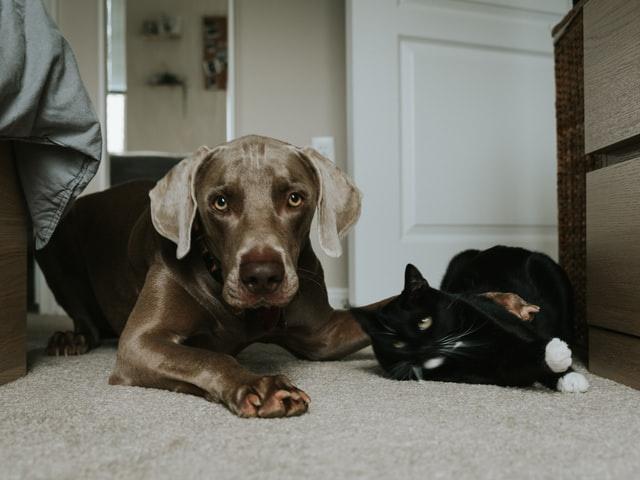 Цикл программ о домашних животных