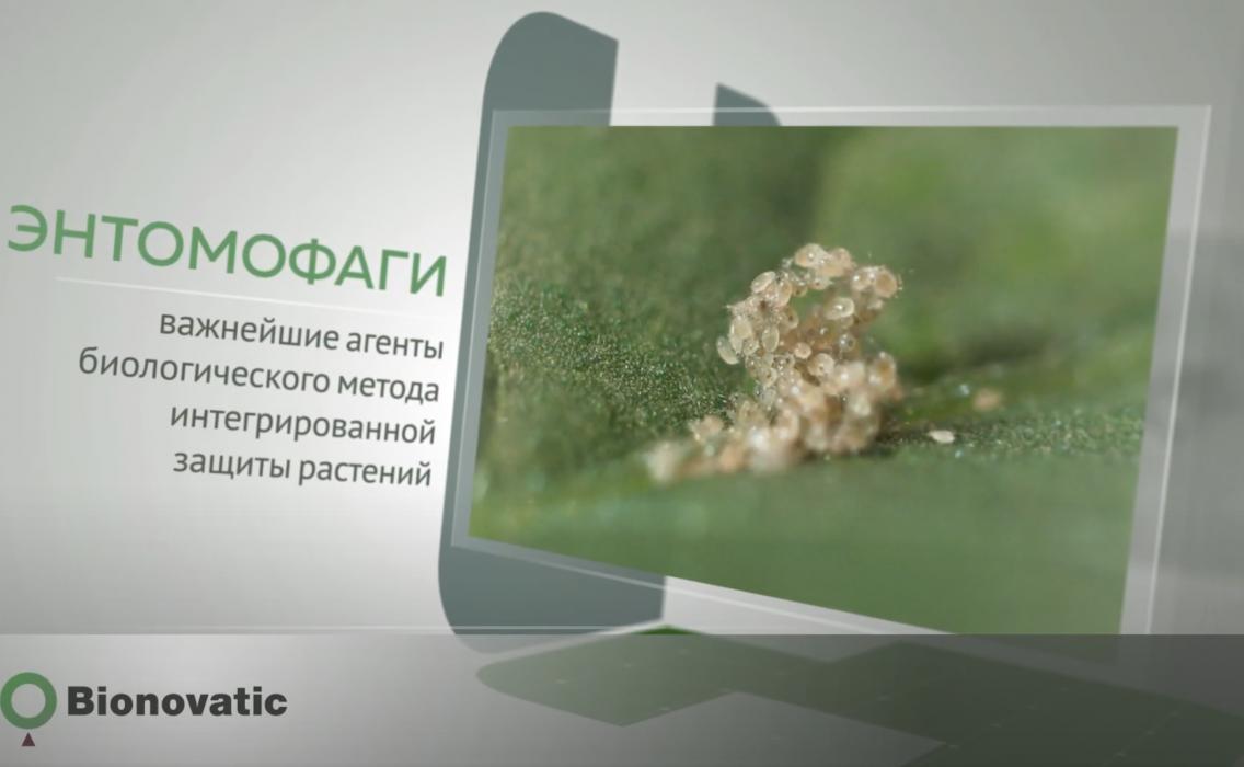 Видеовизитка продукции компании Bionovatic